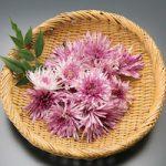 食用菊「かきのもと」